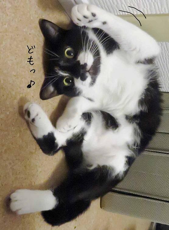 どもっ♪  #猫好きさんと繋がりたい #猫好きな人と繋がりたい #写真が好きな人と繋がりたい  #猫のいる生活 #猫のいる暮らし #猫のいる幸せ  #猫好き #猫写真 #猫あるある #猫 https://t.co/GosLG4Y4Pp
