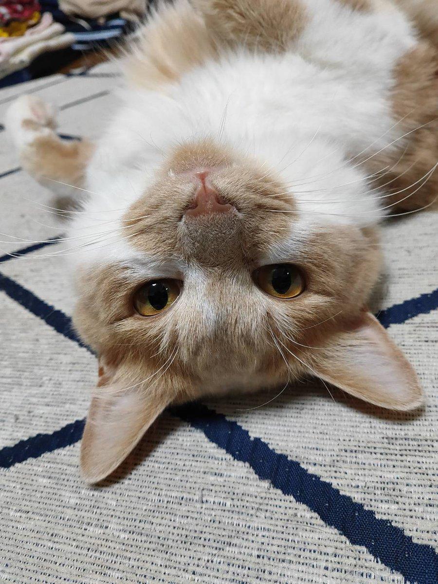 2匹ともお口がかわいい😍😍  #ねこ #猫 #猫のいる生活 #猫好きさんと繋がりたい #猫写真 #猫のいる暮らし #cats https://t.co/pFQY33XnaF