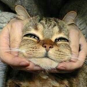 ふふふっ😚 猫ちゃん飼いたいわぁ🥰🐈  #猫好きな人と繋がりたい #猫好きさんと繋がりたい  #猫写真 #猫動画 #猫がいる喜び https://t.co/bQgd5Wsmib