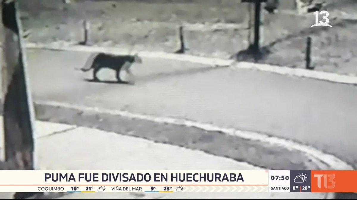 Puma fue divisado en Huechuraba  EN VIVO por #T13AM  📺 » https://t.co/neKeHxJS2Q https://t.co/4chTYHAfpD