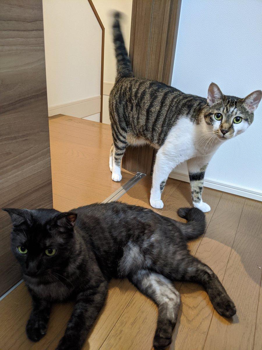 ツーショットは珍しいです😁  #猫 #猫好きさんと繋がりたい  #キジトラ #サビ猫 #猫2匹 #兄弟 https://t.co/Z0Fn6frevx