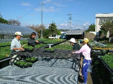 農業に参加してみませんか。例えば愛知県春日井市では、技術指導者と共に花や野菜の苗の生産・販売を手がけるなど、農業分野で就職氷河期世代の方々の活躍の場が広がっています。他の取組事例なども紹介していますので、興味のある方はHPをご覧ください。