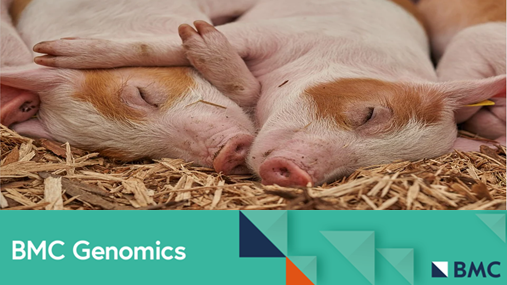 A new study in #BMCGenomics investigates the genetic basis of natural antibodies (NAb) in the blood of pigs, and reports that levels of NAb and total IgG in plasma may be potential indicators of disease resilience https://t.co/yuPirdeJb7 https://t.co/etFvhK37HB