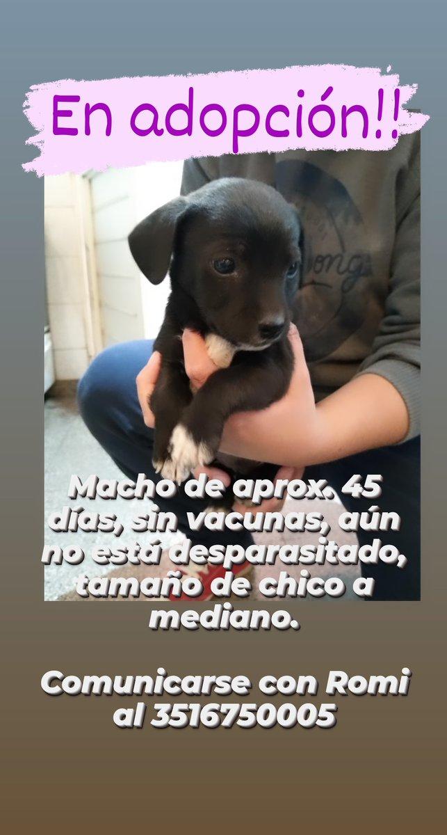 Me dejaron un perrito en la puerta de casa, me ayudan a buscarle casita?? Puedo llevarlo a cualquier parte de Córdoba capital. https://t.co/Mz2srwASdi