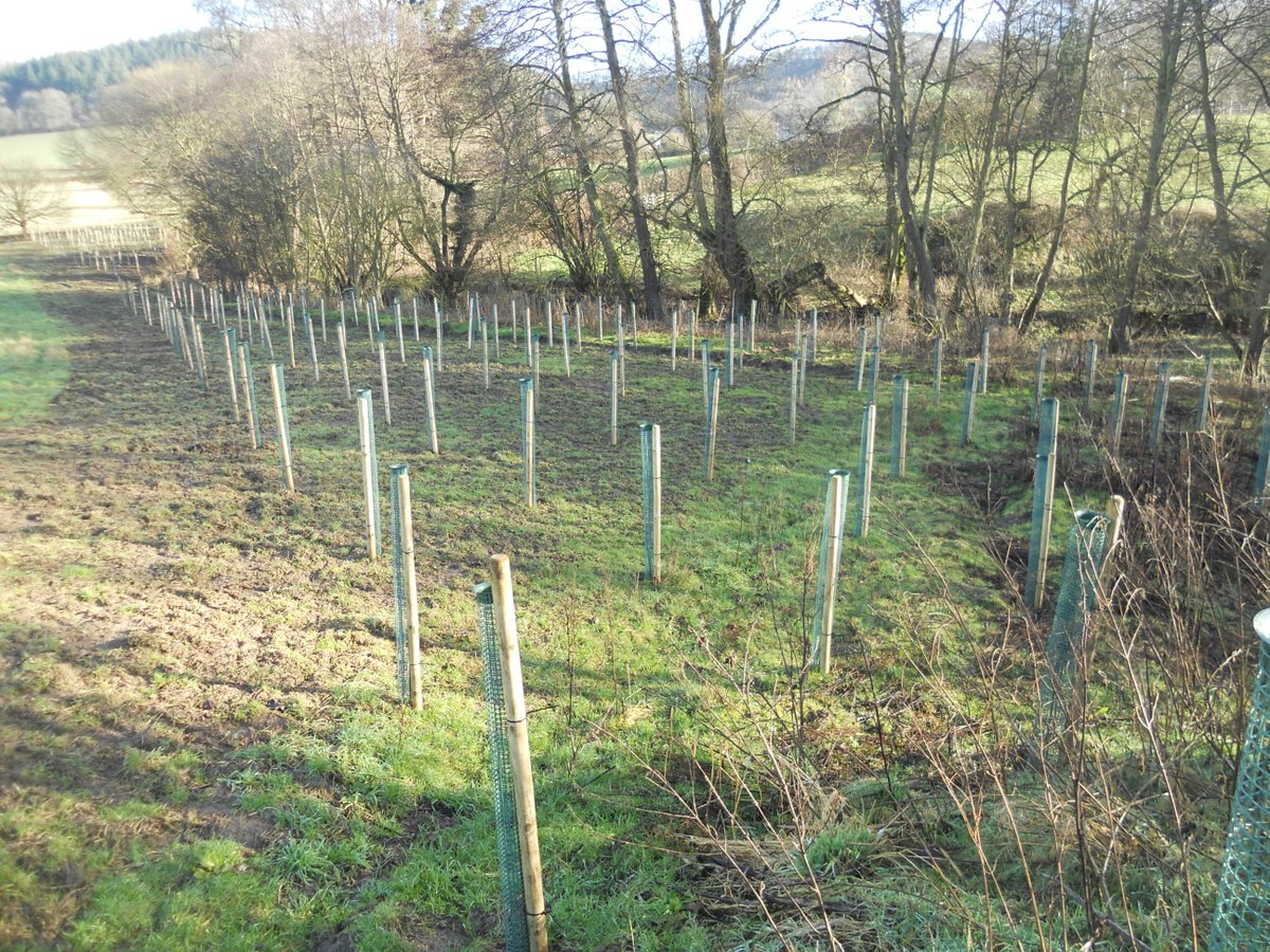 We're working with @WoodlandTrust to plant more trees in the #ShropshireHills.  Planting small woodlands & hedgerows help to conserve soils, improve water infiltration & join up habitats that allow wildlife and people to thrive #MyNationalLandscapes  @NE_WestMids @ShropCouncil https://t.co/ihARAW8RiH