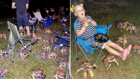 Granchi giganti assaltano il barbecue di una famiglia (FOTO) - https://t.co/OB9WxvjZl7 #blogsicilia #23settembre