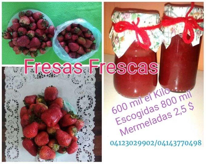 #23Sept | Publica y Aumenta tus Ventas con A☀️R  | Fresas frescas, congeladas y mermeladas Contáctanos 04123029902 SERVICIO DELIVERY  https://t.co/Oe1JkqgNg0 Fuerte Tiuna #CiudadTiuna #FuerteTiuna ? Venezolanos #emprendedores #emprendedor #Negocios #ventas #Venezuela https://t.co/AMOdhWqo7A