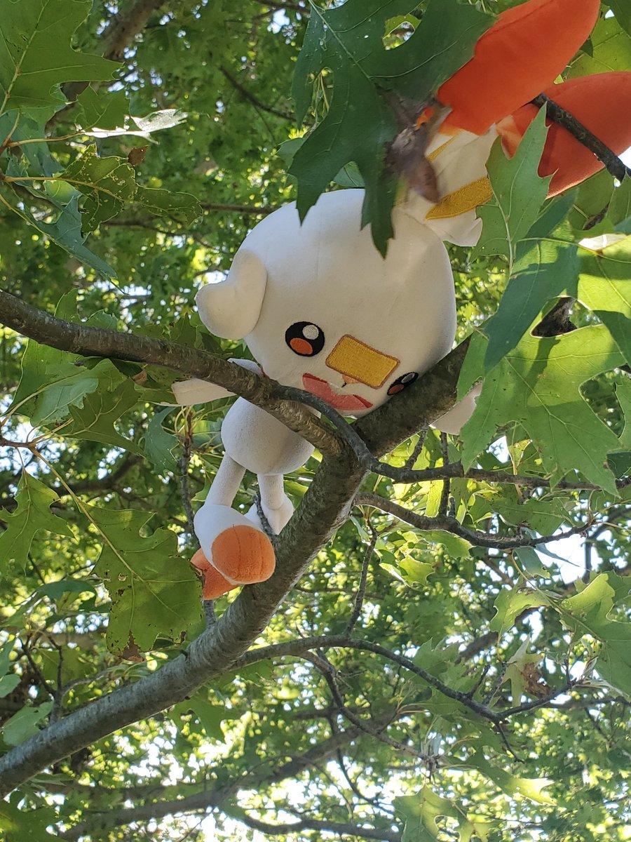 "I am scorbunny, and I speak for the trees. The trees say: ""leaf me alone, im bushed."" #pokemon #PokemonSwordShield #ATLA #lorax https://t.co/PUUBpeRW82"