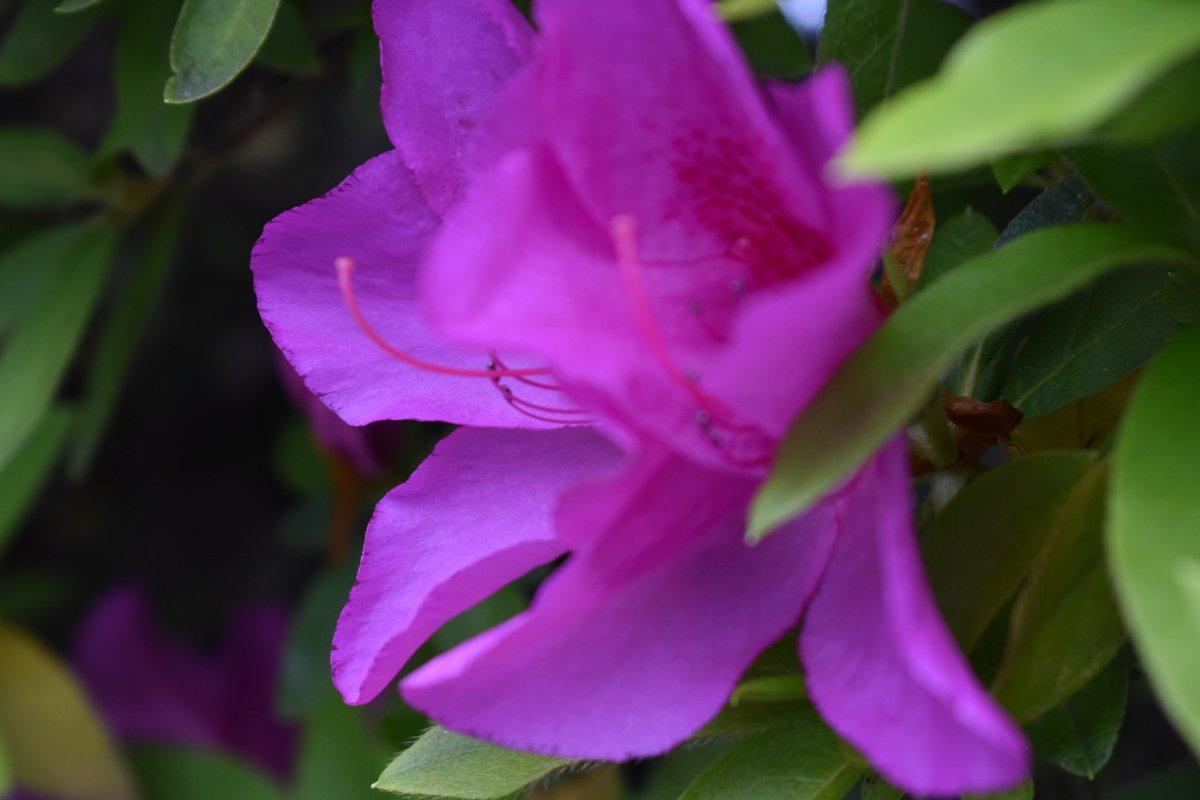 """FLOWER"" #photoartist #photographer #photography #nikon #nikond3500  #flower #UD https://t.co/KmqyNJqjDH"