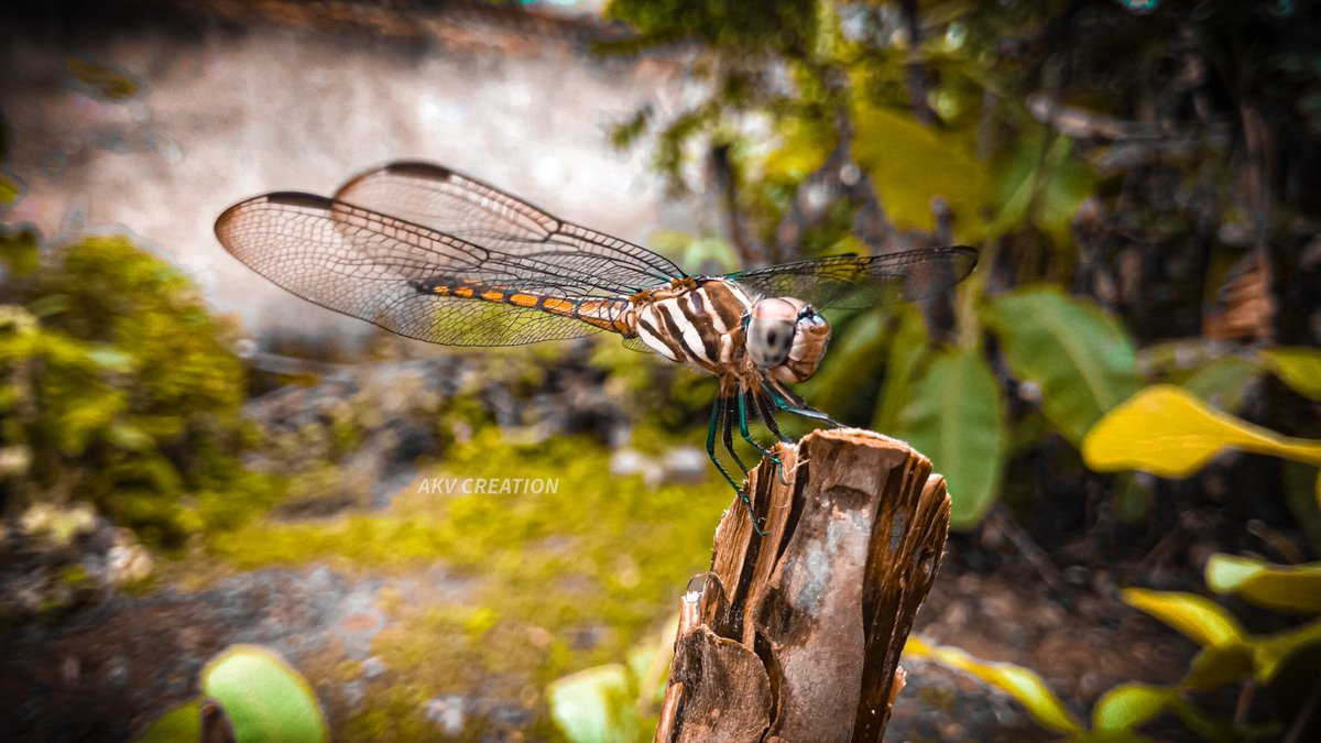 #cute #beautiful #Nice_Photo #wow #amazing #amazing_shots #waterdroplets #nature #photographer #photooftheday #likes #like #trending #photography #NaturePhotography #wildlifephotography #butterflyeffect #photooftheday https://t.co/R6YiYv0iC3