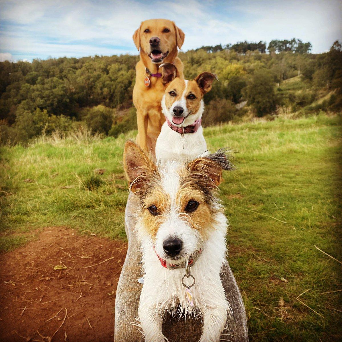 We love Scotland #Scotland #dogsofscotland #discoverscotland #wildscotland #dogsoftwitter #dogwalk #terriers #labrador #labradorretriever https://t.co/aggWvYjSIT