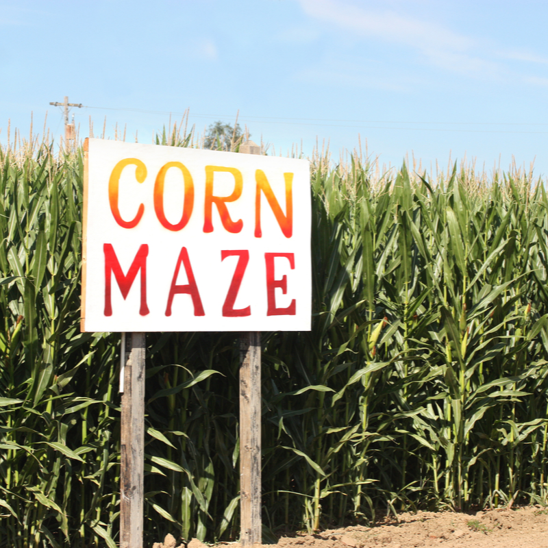 Crazy for corn mazes? Learn how Maryland farms create their mazes — from design to completion. https://t.co/V2OZway8gW #MyMdFarmers #Fall #FallFestivities #CornMaze https://t.co/mhbOXm31fC