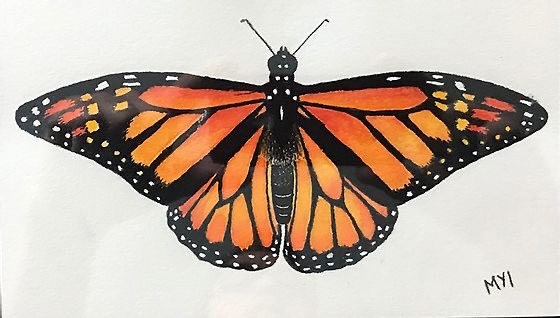 """Michelle Ibaraki Monarch Butterfly Coloured pencil 5"""" x 9"""" $95 Available on our website.  #affordableart #monarchbutterfly #butterfly #outsidersandothers https://t.co/HGvyBninHr"""