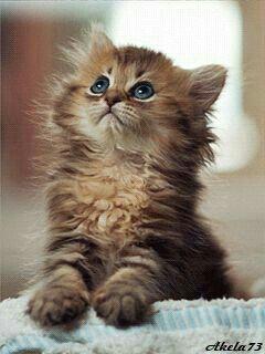 https://t.co/2KYXDgGuMM | https://t.co/e4m2dbD2Nj #pets #cats #animals https://t.co/usNmBZopUe