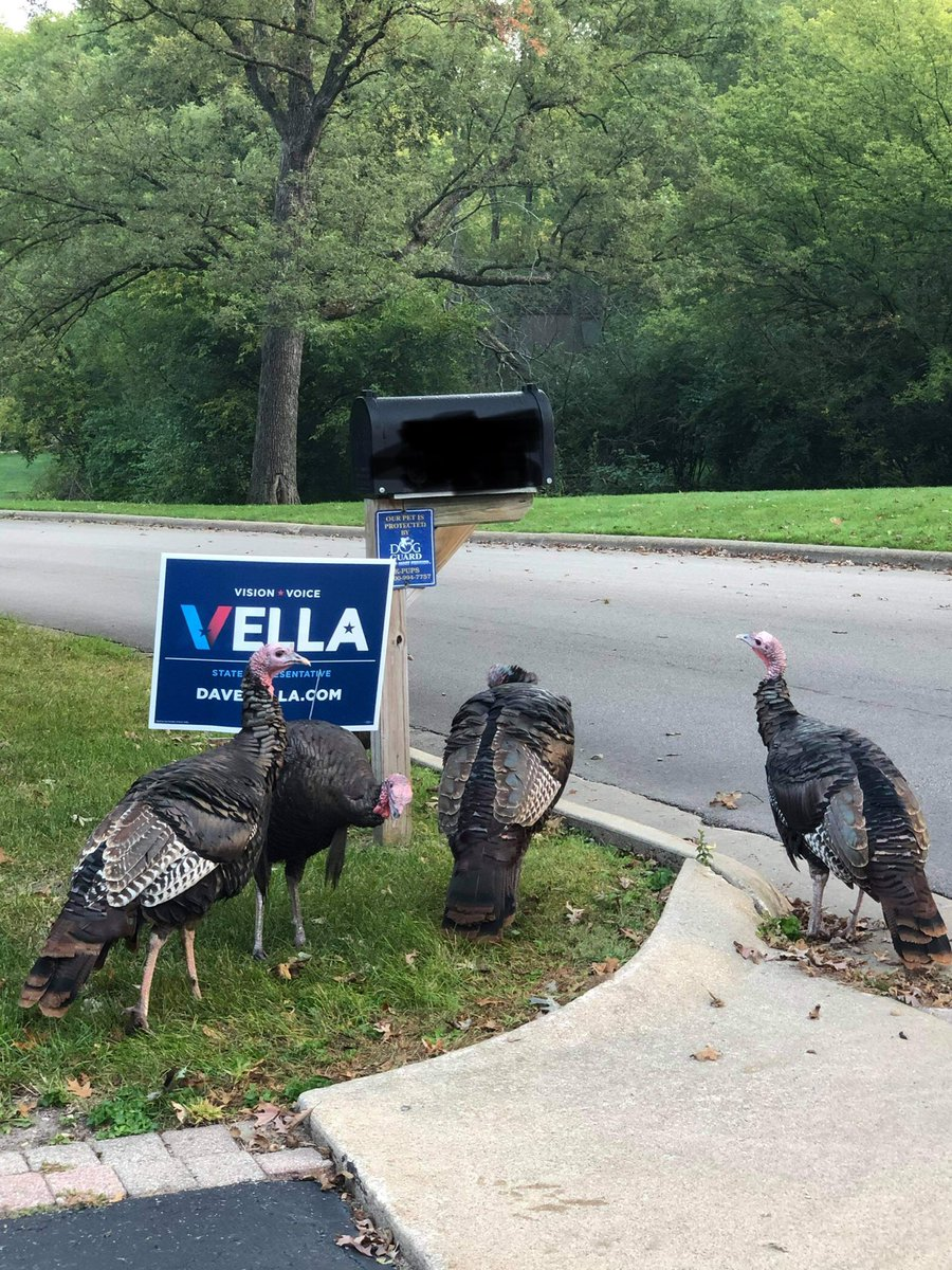 It looks like our campaign has caught the attention of some of Rockford's feathered residents. . #Voice #Vision #Vote #Vella #68thdistrict https://t.co/LimD8K3NCL