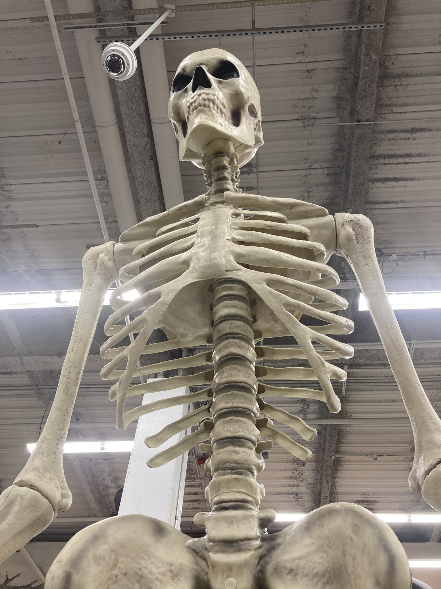 Home Depot Giant Skeleton Is Taking The Internet By Storm Resetera