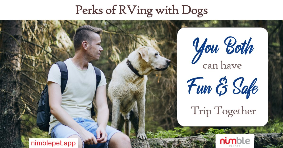 Perks of RVing with dogs- You both can have fun and safe trip together. . . #Rving #Rvers #Rvlife #RV #travel #memories #pets #dogs https://t.co/nHxQegzOwh