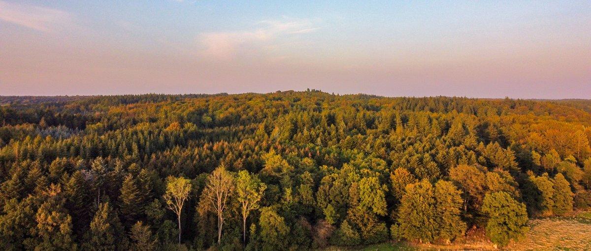 Bidstrup forests in Denmark a late evening.  #Denmark #dronephotography #NaturePhotography  #September23th #photooftheday #WednesdayVibes #WednesdayMotivation #WednesdayMood #djimavicmini   📸Dorte Hedengran https://t.co/l1Zfsa1T48