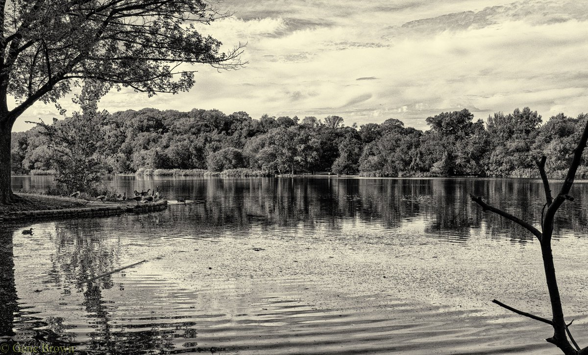#photography  #dailyphoto  #ppixxells #photooftheday #YourAwesomePics #blackandwhitephotography #bnw_captures #Nature #NaturePhotography #Pentax   Prospect Park Lake https://t.co/DH61Zi0cH1