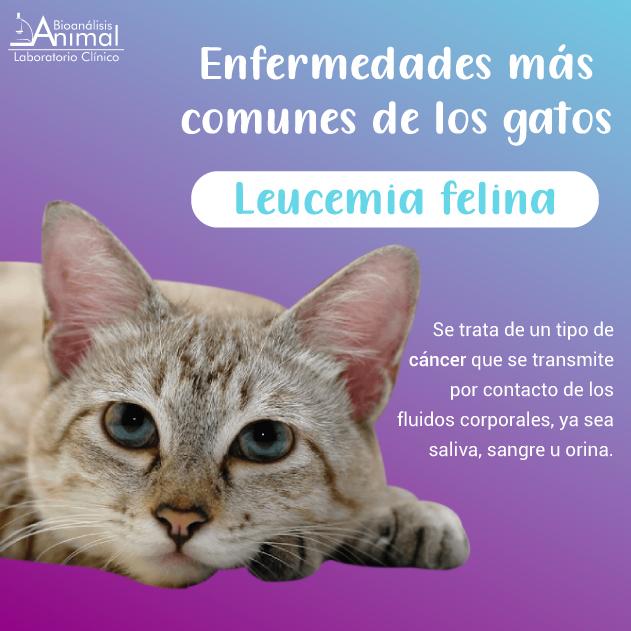 Servicios de vacunación, consulta, exámenes médicos. Llámanos: + (57) 3051634- 6942121- 5333475- 5333406- WhatsApp: 312-5183800,  310-3101275.  #quedateencasa #domicilios #domiciliosbogota #bioanalisisanimal #laboratorioclinicoaninal #veterinaria #consultamedicaveterinaria https://t.co/4nFIMZ9d0T