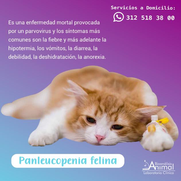 Servicios de vacunación, consulta, exámenes médicos. Llámanos: + (57) 3051634- 6942121- 5333475- 5333406- WhatsApp: 312-5183800,  310-3101275.  #quedateencasa #domicilios #domiciliosbogota #bioanalisisanimal #laboratorioclinicoaninal #veterinaria #consultamedicaveterinaria https://t.co/BOuTm84t1l
