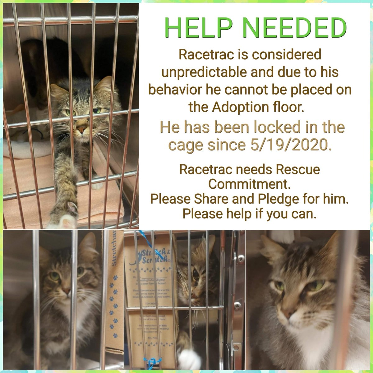 """Tabby boy kitty Racetrac at #CobbCounty in #MariettaGA is enormously good-looking but """"unpredictable"""" so will need a special kind of adopter! Poor guy has been in that tiny cage for almost 4 months! Adopt! Pledge for rescue! Phone: (770) 499-4136 URGENT!  https://t.co/1dRWer7Mdc https://t.co/YuQkNAdCG4"""