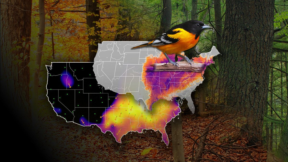 #Postdoc with @CornellBirds. Develop macro-demographic indices of avian recruitment & mortality using NEXRAD data, #eBird data, & NEON & Phenocam data. @AdriaanDokter @ali__johnston Apply by 9/27 https://t.co/cMzTdEDjFa #job #STEM #stats #ornithology #diversityinSTEM https://t.co/rxcaAOq4kh