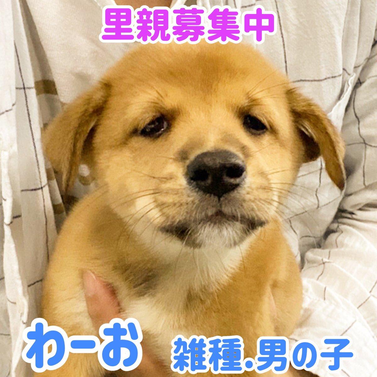 無料 大阪 里親 子犬