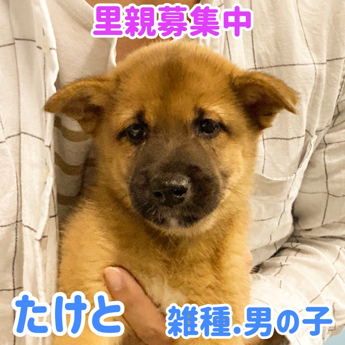 里親 大阪 子犬 無料
