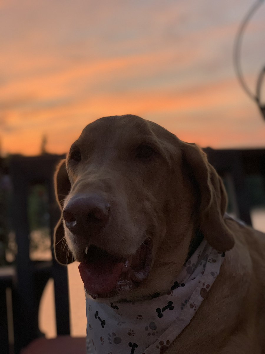 Friends, we have company over till tomorrow. I miss seeing your posts and adventures, Mommy is busy with guests🙄 Love you pals🐾❤️ #dogsoftwitter #dogsofinstagram #dog #WednesdayThoughts #friends #lake #lakedog #sunset https://t.co/NJuDsr9CYl