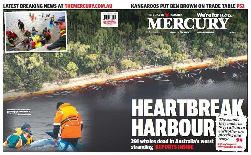 Make sure you pick up a copy of today's @themercurycomau which features a special wrap on the latest on the west coast whale disaster. For all the latest from Day 4 of the rescue, check out https://t.co/1zWSsYpG8Q https://t.co/v2xr4WTSCb