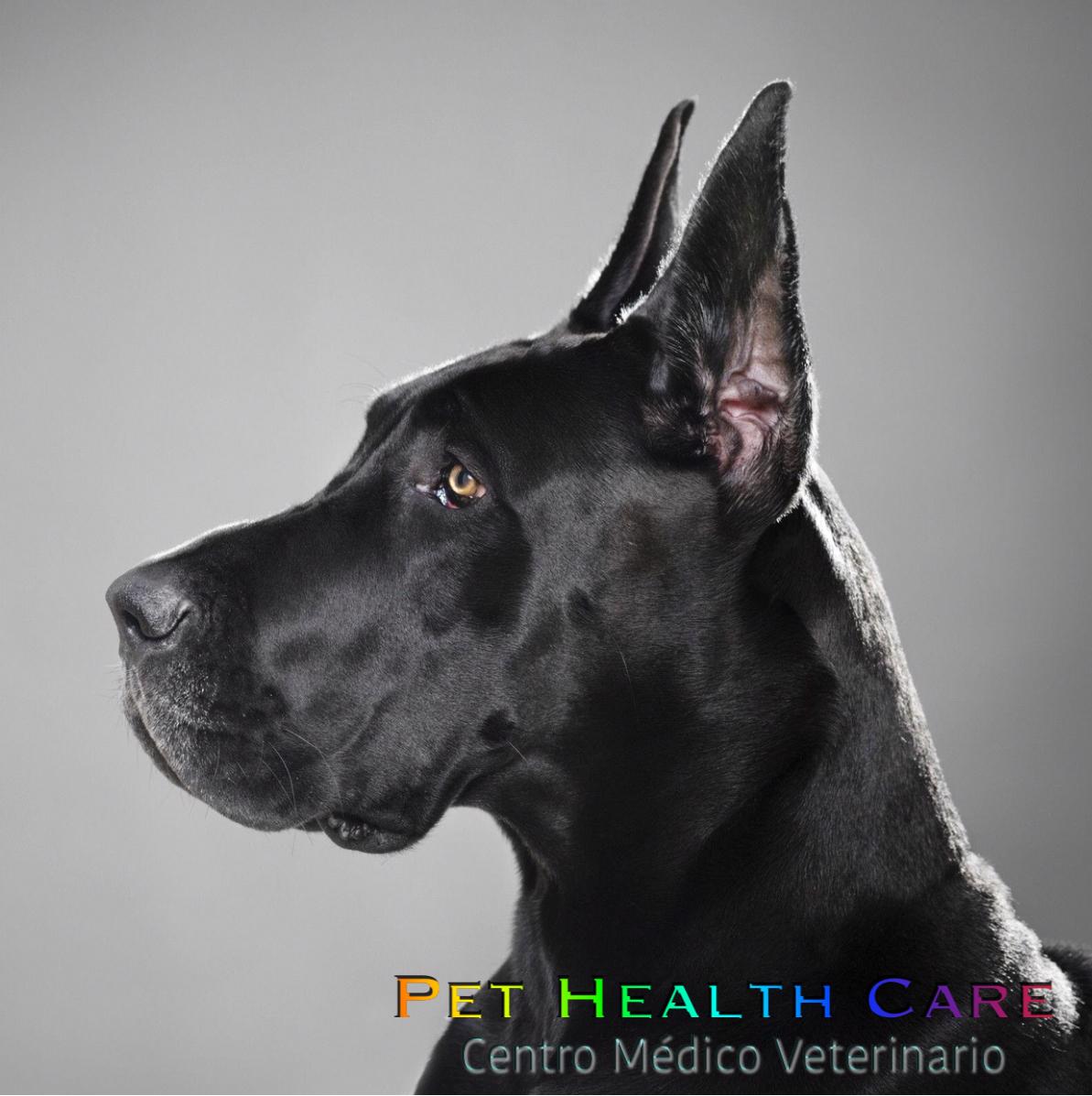 Descripción y personalidad de los perros raza Gran Danés !!! https://t.co/X5Np5f73PK #perros #dogs #ilovedogs #doglovers #mascotas #pets #petlovers #colombia #tunja #veterinaria #veterinary #petshop #grooming #pethealthcare https://t.co/6JihR8bpEB