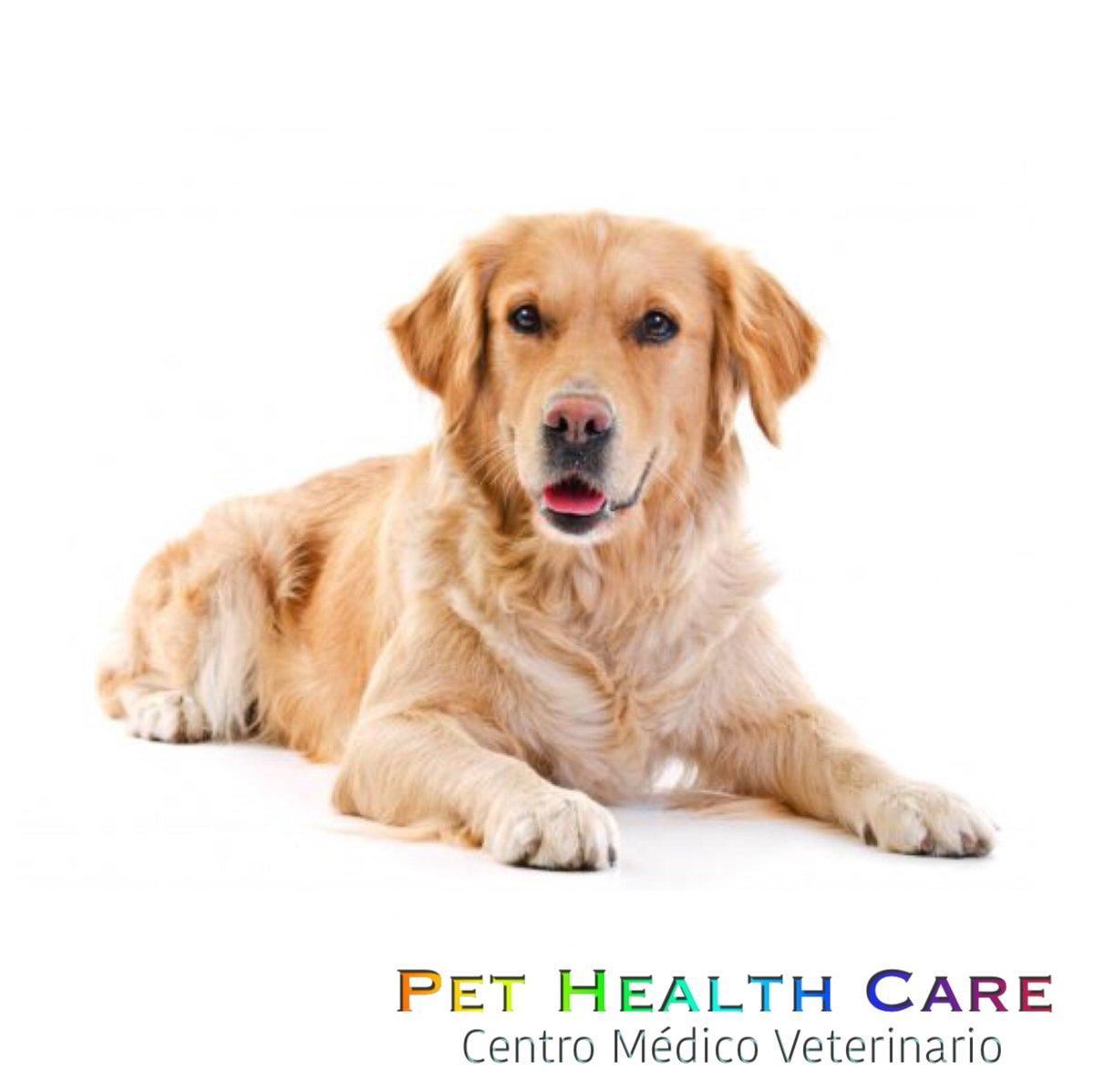Cepilla a tu perro diariamente !!! https://t.co/EQ5cuSUpKx #perros #dogs #ilovedogs #doglovers #mascotas #pets #petlovers #colombia #tunja #veterinaria #veterinary #petshop #grooming #pethealthcare https://t.co/BOERhVpuG1