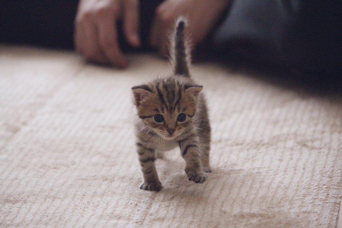 \テシッ/って歩くじゃん?可愛いじゃん?