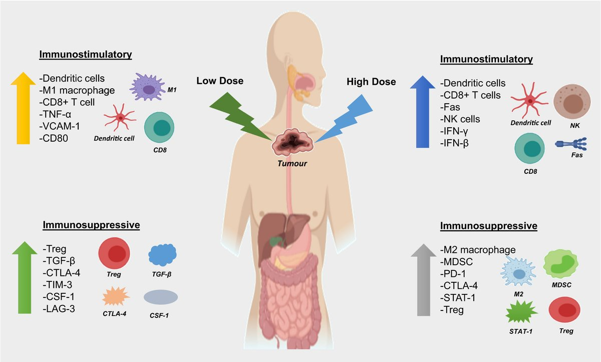 CTI Review: 'Enhancing the efficacy of immunotherapy using radiotherapy' by Keam et al, @NCARD_research @UWAresearch Sir Charles Gairdner Hospital.  https://t.co/GyPz9Fj5jy #ClinTransImmunol #Immunology #Openaccess #radiotherapy #apoptosis #Immunecheckpoint @wileyinresearch https://t.co/YGHUxLdTfD