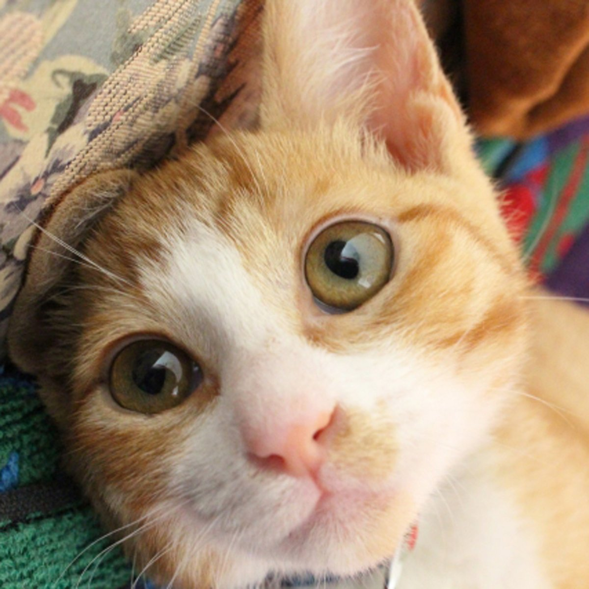 かわいいにゃんこ♪ #ハニーペット #HONEYPET #honeypet #猫 #ねこ #ねこ部 #にゃんすたぐらむ #にゃんこ #子猫 #ネコ #ねこのいる生活 #ねこのきもち #ねこのいる暮らし #kitty #catstagram #petstagram #instacat #meow #instagood #follow #followme https://t.co/7FgWToW2A8