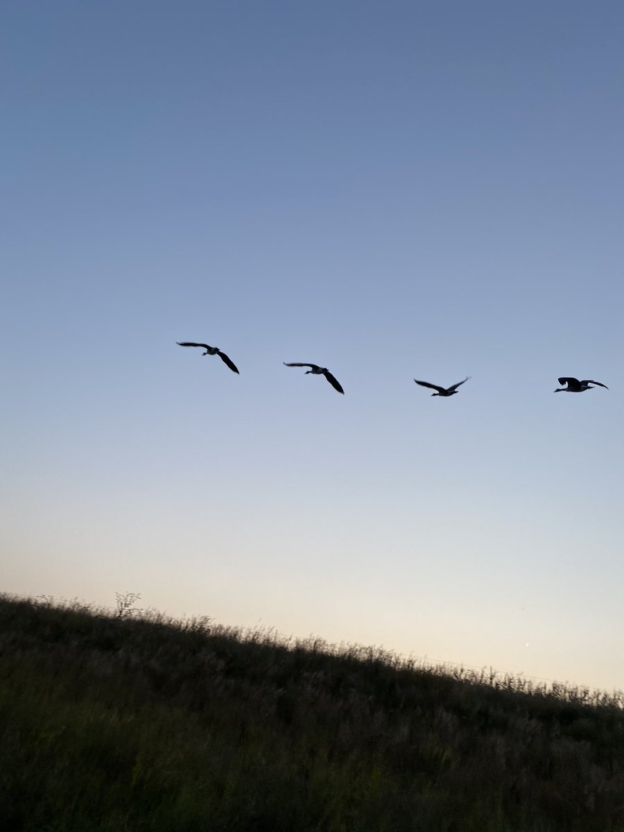 Geese carry twilight across a perfect autumn day, inviting night.  #poetry #poetrycommunity #poetrylovers #poem #poems #poemoftheday #writing #writer #writerslife #writers #poet  #haiku #instahaiku #haikucommunity https://t.co/HdPAfc7vow