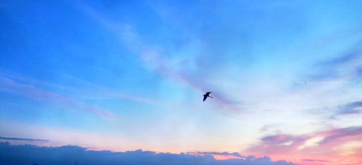 Into the.....   #eveningsky #sunset #nature #sky #evening #naturephotography #photography #clouds #sunsetphotography #ig #sunsets #landscape #photooftheday #skyphotography #eveningwalk #sunsetlover #landscapephotography https://t.co/jCPuYLGdkx