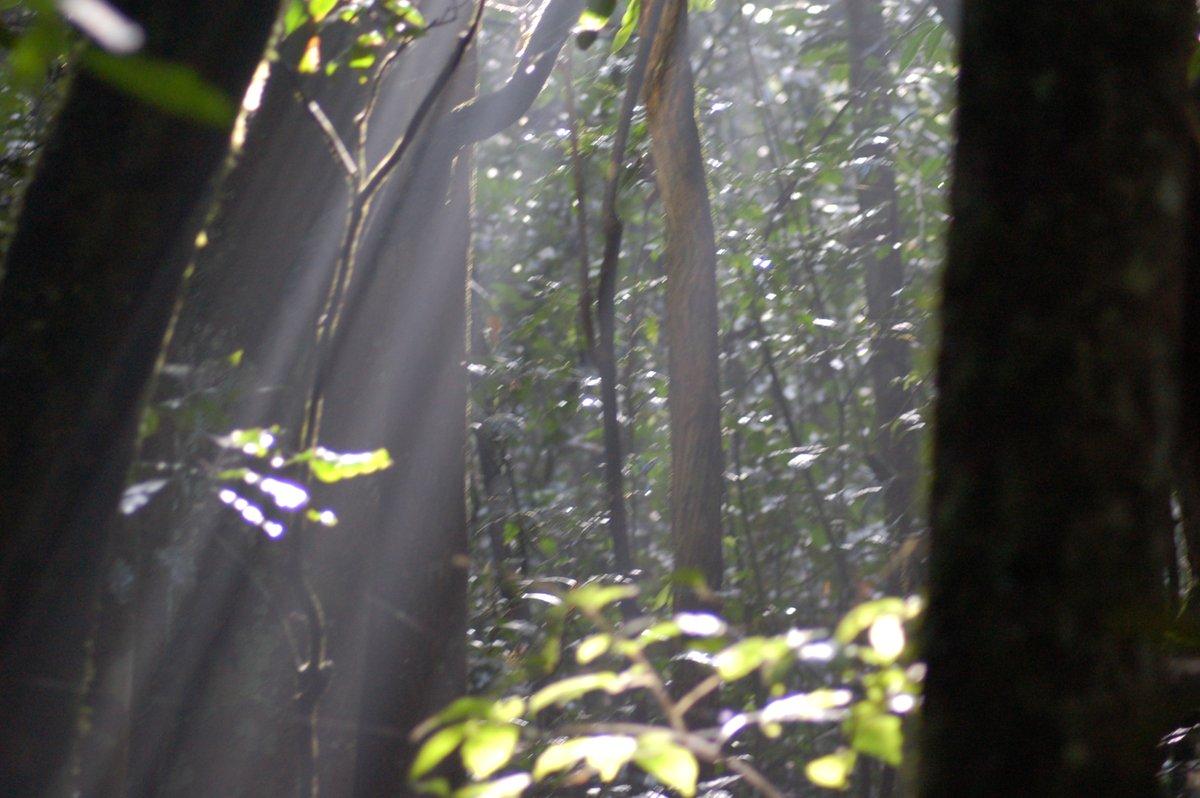 The beauty of morning sunrise in the lush forests of Uganda #nature #safetravel #safeholiday #safetravels #visituganda #kibaleforestnationalpark #safariuganda #tourism info@cultoursandsafaris.com, https://t.co/NEHx9qEuoP +256 414 660243, +256 775776980 https://t.co/VKTEIbTehS