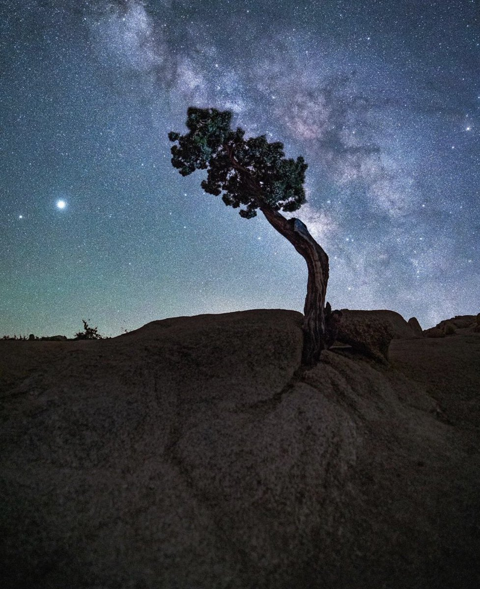 Joshua Tree  Coachella Valley Photo! - by Sammy https://t.co/oMtWRwKMeb
