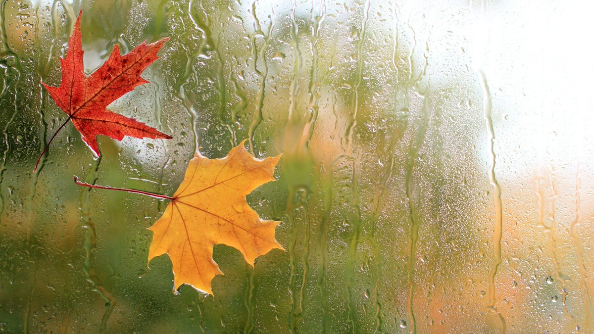 It Might Rain Today by Liliana E. Guzmán https://t.co/6OuCeeWASK #poem #poems #poetry #poetryblog #poet #poets #writing #writer #writingcommunity #autumn #fall #autumnvibes #autumn2020 #fallvibes #fall2020 #blog #blogs #zine #zines https://t.co/DlgBG8kccE