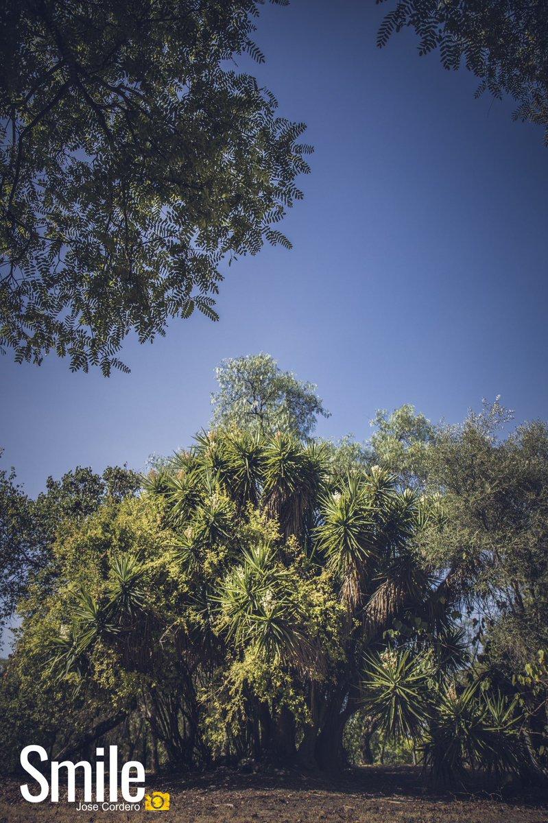 Mantén tu amor hacia la naturaleza, porque es la verdadera forma de entender el arte más y más.  Vincent Van Gogh. . . @josecorderophoto  . . . . #landscape #fotografia #naturaleza_spain #nature #parque #landscape_lovers #photography #naturaleza #natural #landscapephotography https://t.co/5lAkSyFhE6