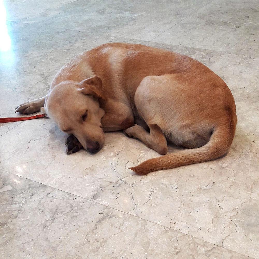 .sLeeping K9. 🐶🐶🐶 #sleepingk9 #sleepingdog #sleepingdoggo #dog #doggo #doggie #doggy #dogpost #doggopost #dogphoto #doggophoto #k9 #dogphotography #doggophotography #latepost https://t.co/qbwiTwgGWG