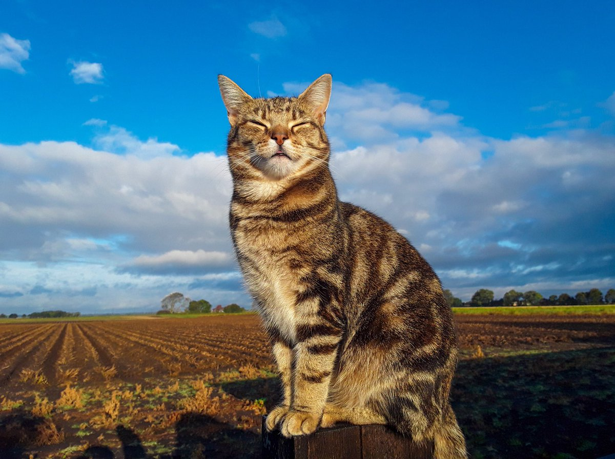 Good morning from Precious and the view from my window. Sunshine and showers this morning with a little chill. Have a great day all xxx #CatsOfTwitter #CatsOnTwitter #Precious #Viewfrommywindow #thefens #ThursdayMotivation #Cambridgeshire https://t.co/WcLPKEQXLv