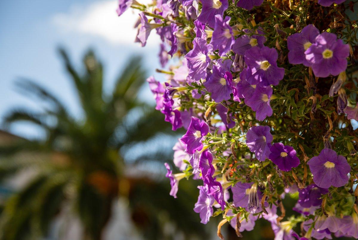 #bloemen #nature #Landes #doucefrance #magnifiquefrance #garden #photography #photo #fotografia #fotografie #genieten #france #flower #fleurs Dax fr https://t.co/GTcETBfd6Q