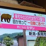 書き方おかしくない?「帰宅中の20代女性クマ襲う」??