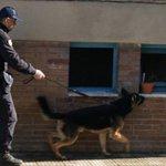 Image for the Tweet beginning: #Cronaca #arresto Detiene droga per