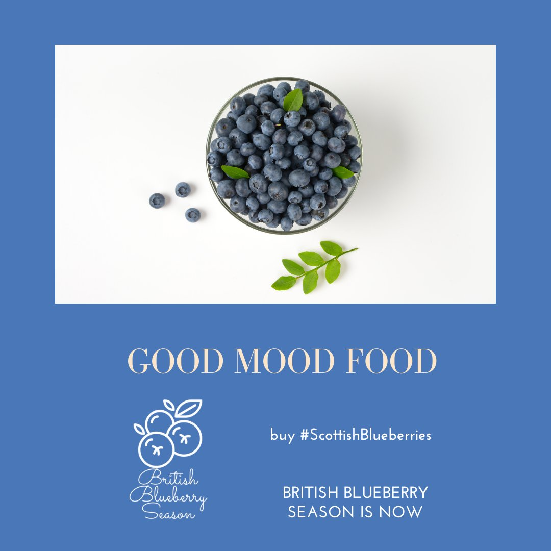Blueberries are rich in antioxidants and folate, which helps your body to produce mood-boosting serotonin.  Making them a good-mood-food!  . . #Blueberries #ScottishBlueberries #BritishBlueberrySeason #Healthy #Happy #Superfood https://t.co/LKXf3vptOB