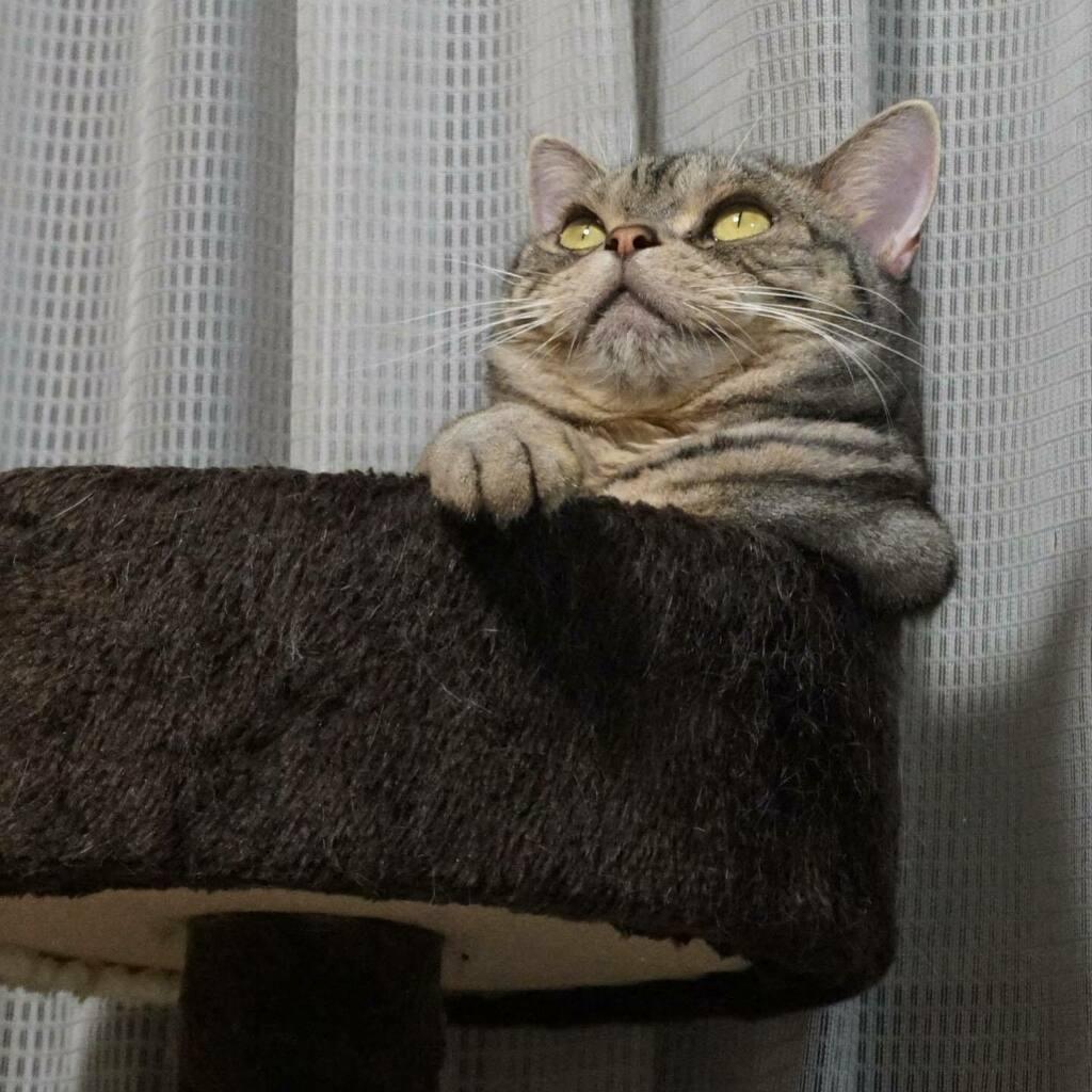 楽しそうね😊流れ星でも見てるみたい⭐️じつは小さな虫なんだけど😅  ・  ・ #cat  #cats #instacat #catstagram #meow  #catlover #猫 #ねこ #neko #にゃんこ #ネコ #ねこ部 #mycat #にゃんすたぐらむ #猫好きさんと繋がりたい #アメショー https://t.co/fpSKvfNW3T https://t.co/QZzUqbBN1c