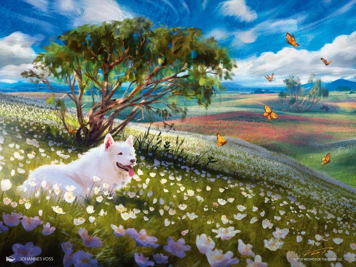 Je découvre en retard cet alternate art d'une plaine spécial CHIEN pour Magic. https://t.co/TnpFDU8gd4